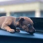 A puppy in a car.