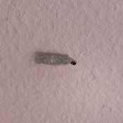 A bug on a white wall.