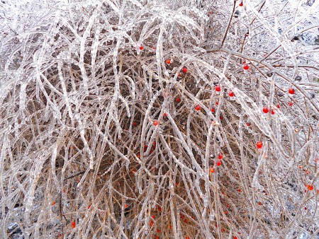 Icy asparagus branches and fruits.
