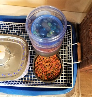 A container of glass marbles on top of cat food in a self feeder.