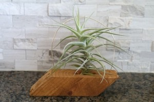 The completed Airplant Wooden Holder