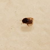 A bug on a light surface.