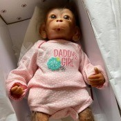 Value of Ashton Drake Monkey Daddy's Girl? - doll in box