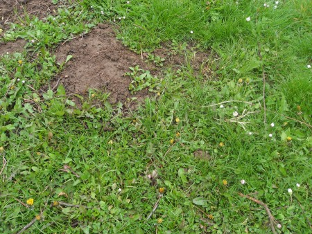 Ecological Ways to Drive Moles Out of the Garden