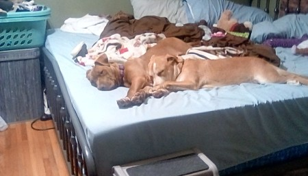 Two dogs lying on a bed.