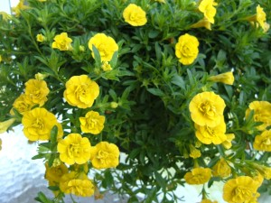 A plant with yellow flowers.