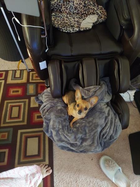 A dog sitting on a blanket.