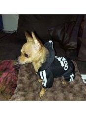 A small dog in an Adidas jacket.