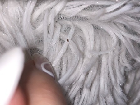 A small bug on a white furry surface.