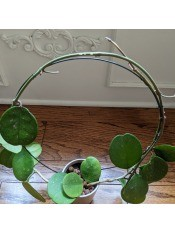 The completed circle plant trellis.