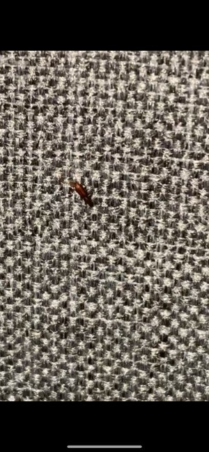 A small red brown bug on a fabric surface.