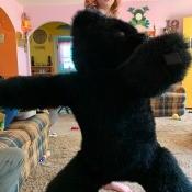 A stuffed black bear.