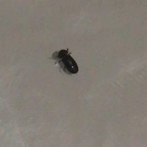 A small dark bug on a white surface.