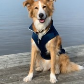 A dog wearing a life vest on a dock.