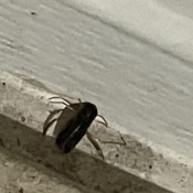 A small bug on a concrete surface.