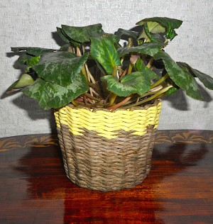 The woven paper basket with a houseplant inside.