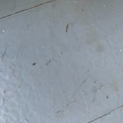 Very small bugs on a tile floor.