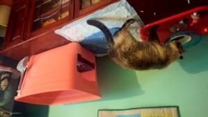 Cat Litter Box Tip