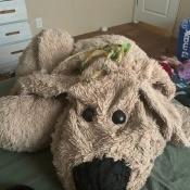 An old stuffed dog.