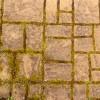 Moss between concrete brick pavers.