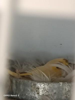 A bird in a nest.