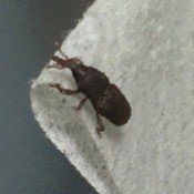 A small bug on a towel.