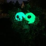 The Glowing Tree Eyes in the dark.