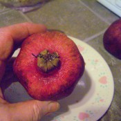 The end of a pomegranate.
