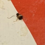 A bug on a white and red surface.